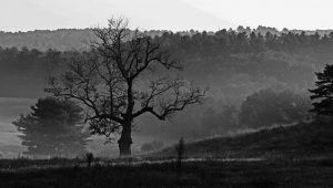 B&W tree Andy Mihail