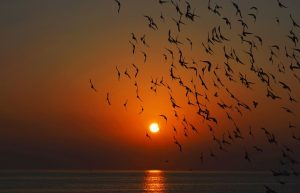 Sunset birds by Andy Mihail